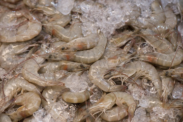 Fresh shrimp chilled in ice.