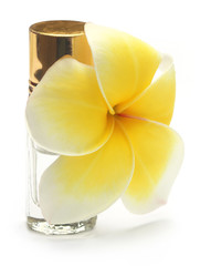 Tropical Frangipani with perfume bottle