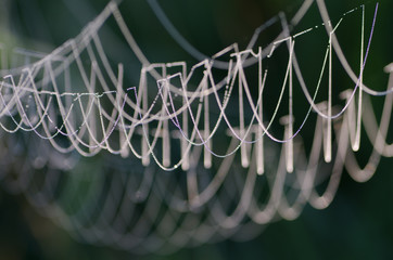 cobweb covered with morning dew