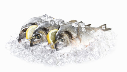 Fresh dorado in ice