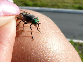 Green fly. The hand holding fly the wing.