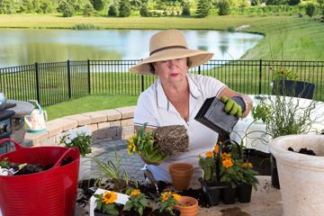 Senior lady gardener repotting houseplants