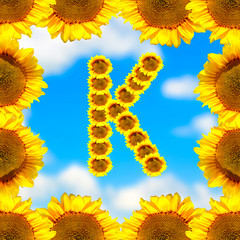 Sunflower letter K