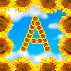 Sunflower letter A