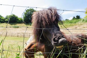 Schwarzes Pferd zeigt zähne