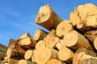 Obrazy na płótnie, fototapety, zdjęcia, fotoobrazy drukowane : Wood preparation