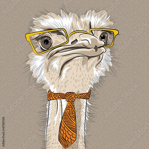 vector closeup portrait of funny Ostrich Bird hipster - 67168564
