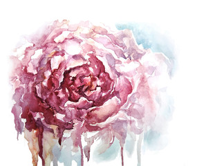 Watercolor peony background, vector illustration