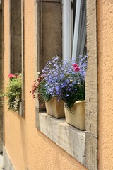 Flowers at the window of a house