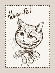 home pet cat