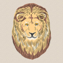 vector closeup portrait of a serious lion