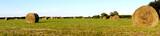 Stroh Heu Weizen Ernte Panorama Landschaft - 67171971