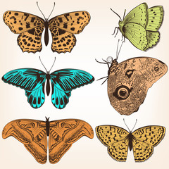Collection of vector hand drawn butterflies