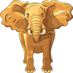 Vector red African elephant