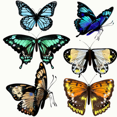 Colorful collection of vector realistic butterflies