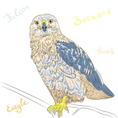 vector colorful bird Rough-legged Buzzard