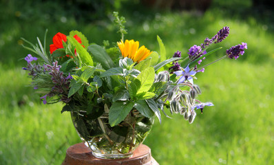 Gartenkräuter und Küchengewürze