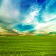 grass green field and blue sky