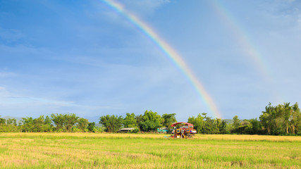 rice harvester working on the field with rainbow sky background