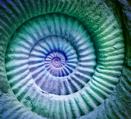 Abstract colors of ammonite prehistoric fossil