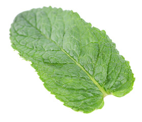 Mint leaf isolated on white