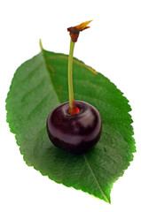 One cherry on a leaf isolated