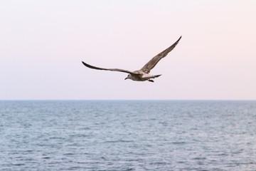 sky sea gull