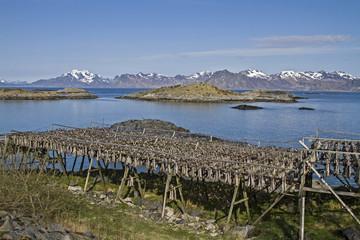 Stockfischgestelle auf den Lofoten