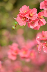 Pink spring floral background