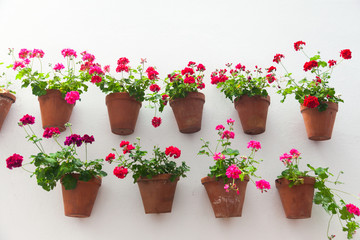 Flowerpots and red flower on a white wall with copy space for te