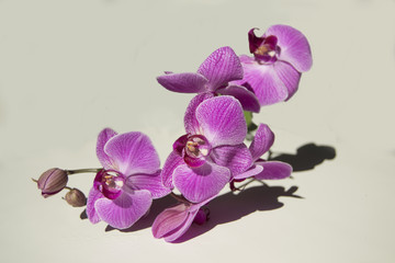 Beauty of the Orchid