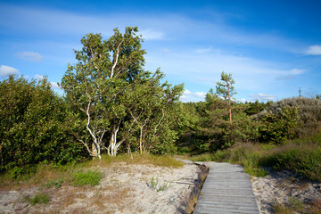 Wooden path at Baltic sea