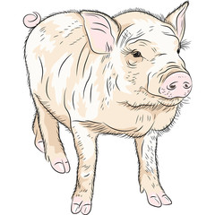 vector closeup portrait of funny piggy