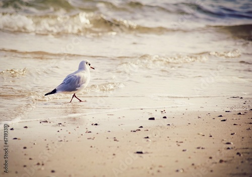 canvas print picture möwe am meer