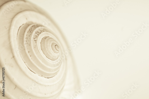 abstract snail spiral - 67193721