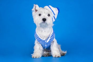 dog dressed as a sailor