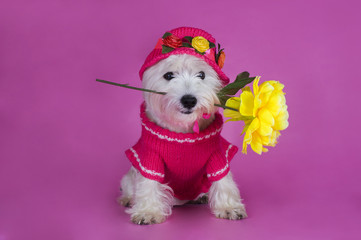 dog in a pink dress and hat with flower
