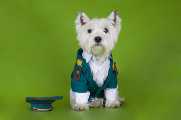 dog dressed as military on a green background