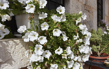 Italy, Sicily, countryside, flowers in a stone house window