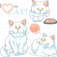 vector set cute white cat with yellow eyes
