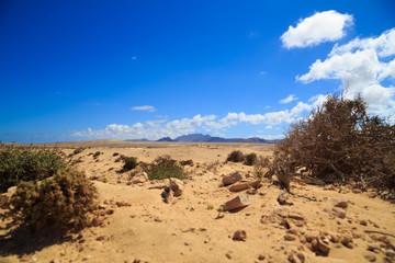 Fuerteventura Wüste