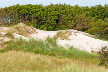 Dune near baltic sea