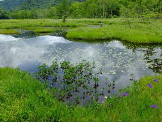 沼 湿地 尾瀬ヶ原