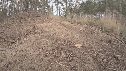 Ants swarming all over their forest mound.