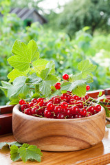 red currants in wooden bowl on on windowsill