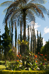 Palm tree in garden of plants