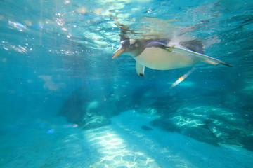 pinguino uccello marino