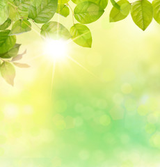 nature light background