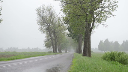 water rain drops fall on rural asphalt road between trees alley