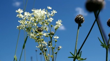 Blooming meadowsweet on a summer meadow